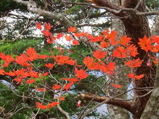 風巻尾根紅葉する木々が多く
