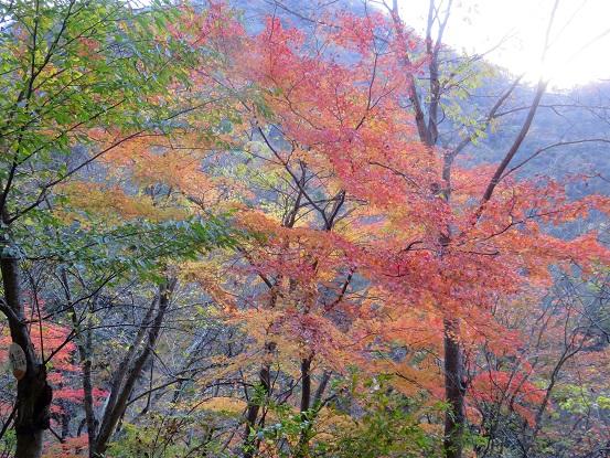 神ノ川ヒュッテ周辺の紅葉