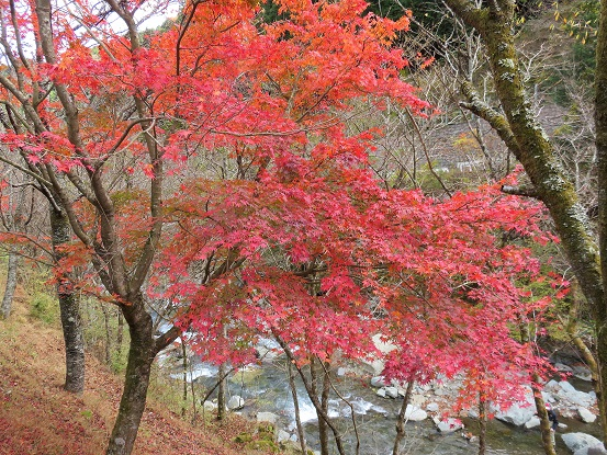 札掛見事な紅葉