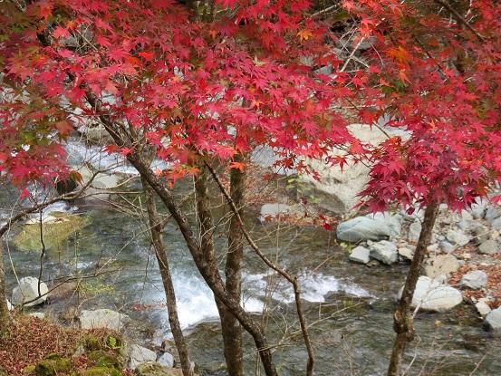札掛川のせせらぎと紅葉