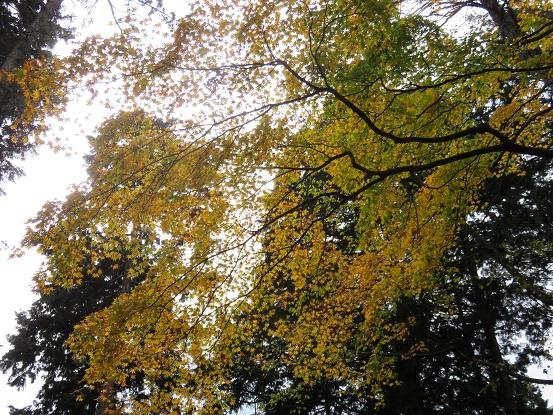 大山北尾根を少し登ると紅葉