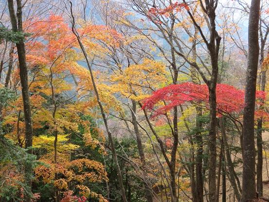 丹沢大山周辺の紅葉