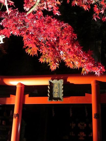 阿夫利神社下社のライトアップされた紅葉