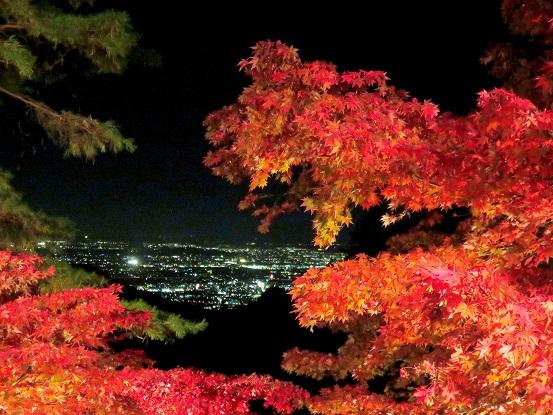 大山寺の参道夜景とライトアップされた紅葉