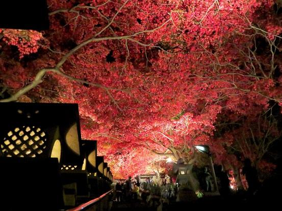 大山寺の灯籠紅葉