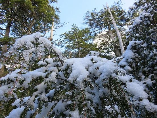 黒金山登山道周辺が雪化粧