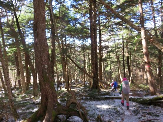 黒金山から大ダオまで樹林帯歩き
