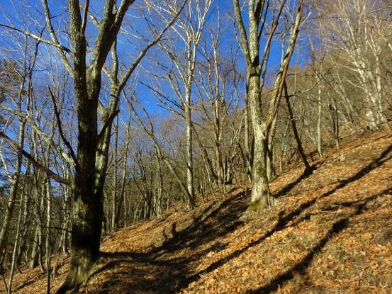 雁坂峠まで樹林帯歩きのルート