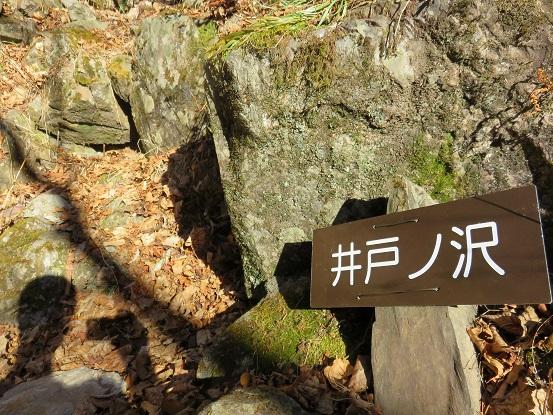 樹林帯歩き井戸ノ沢