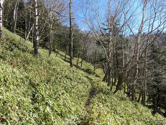 登山道の傾斜が緩く