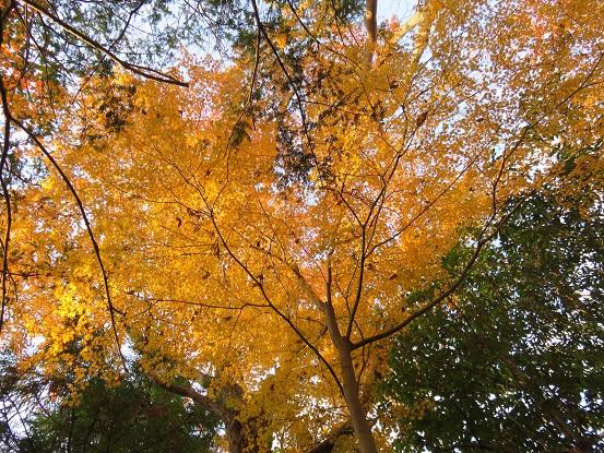 鳥手山舗装された林道見事な紅葉