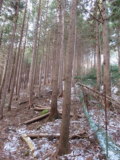 栂立尾根鹿柵沿いのルート