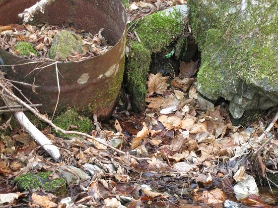 二瀬尾根造林小屋跡付近にある水場