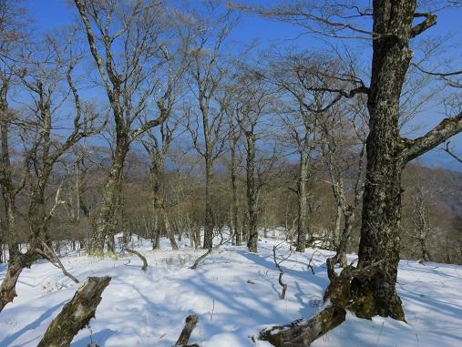 丹沢山に比べ積雪量が増え