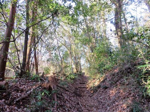 高尾山の登山道の様子