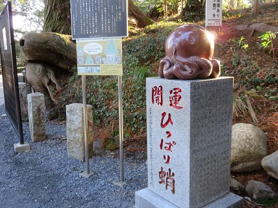 高尾山タコ杉の様子