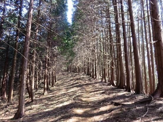 城山から大垂水峠までの尾根道