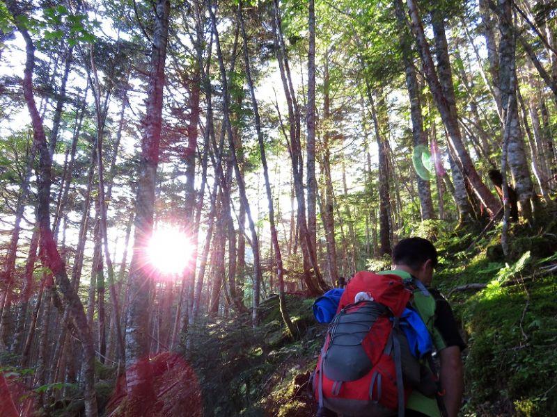 南アルプス樹林帯