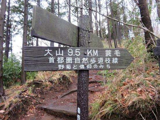 大山野菊と信仰のみちを使って大山山頂
