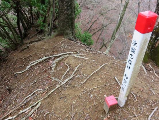 水源の森林の杭