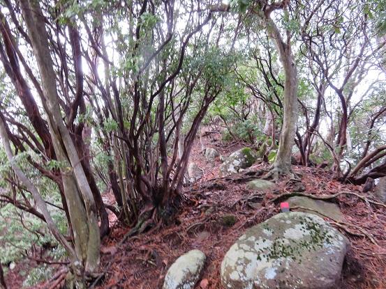 鍋嵐の山頂直下の尾根の様子