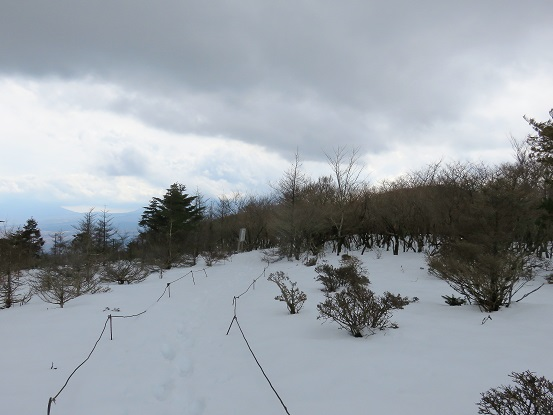 大洞山から直ぐの所にアザミ平