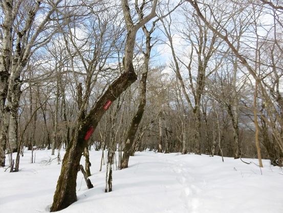 畑尾山周辺も積雪が凄く、本格的な冬山