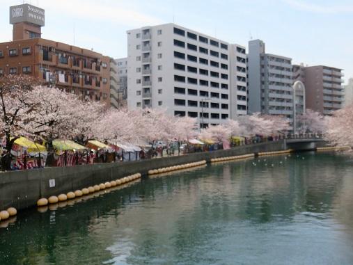 桜木町・日ノ出の大岡川桜と出店