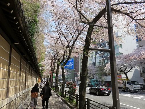 「靖国通り」の桜並木