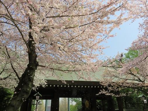 桜吹雪も綺麗