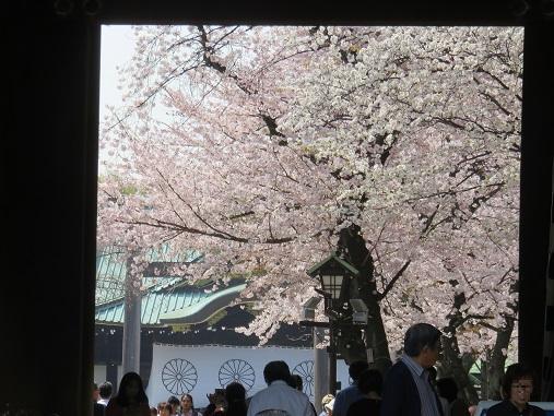 桜の時期は、本当に絵になる靖国神社