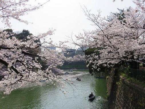 東京の桜の観光スポットである千鳥ヶ淵