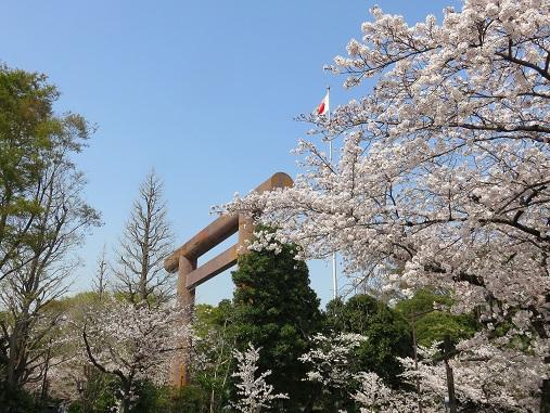桜は日本の象徴