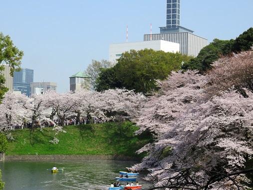 桜の景色を見れるなら
