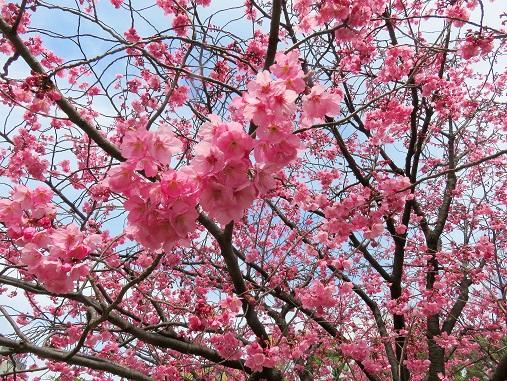 桜の花の周り