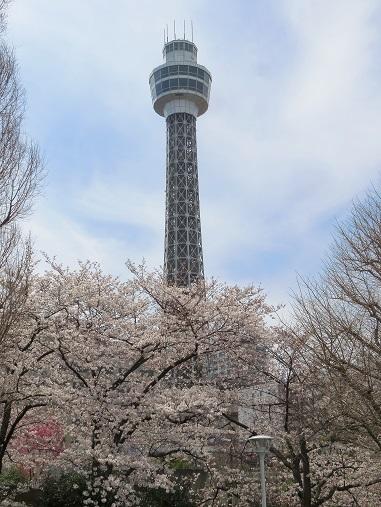 マリンタワーと桜
