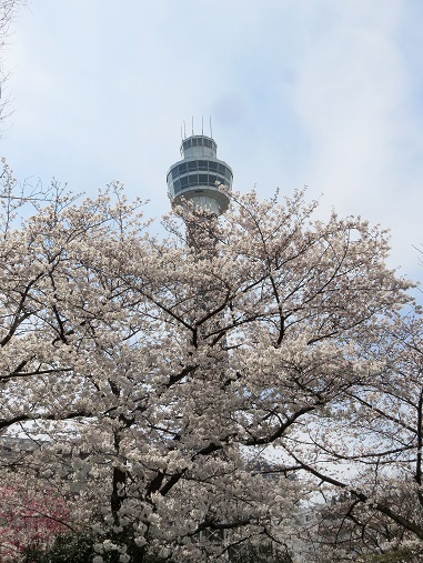 桜の花がモザイクのようにマリンタワーを隠してます