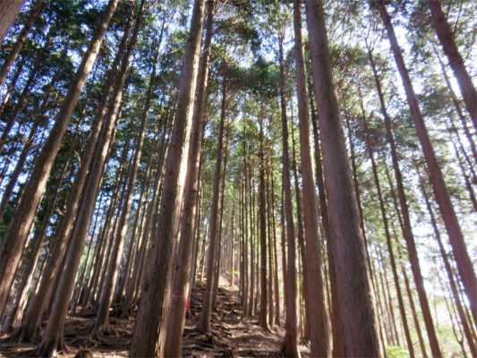 樹林帯急登