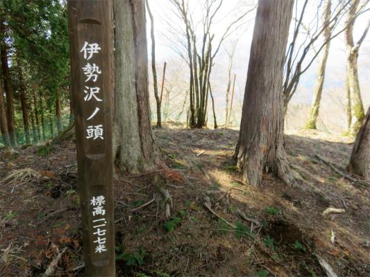 伊勢沢ノ頭(標高1,177m)