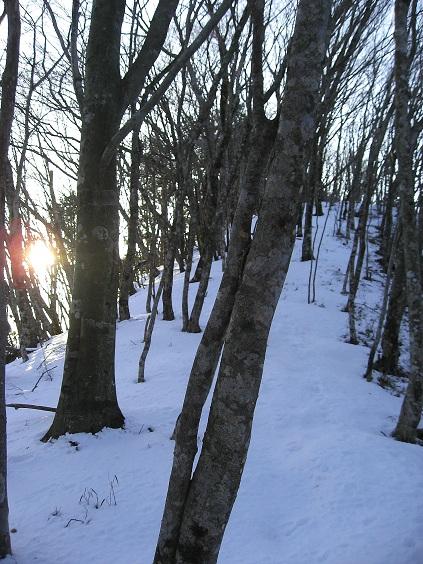 秋葉山(破線ルート)の分岐