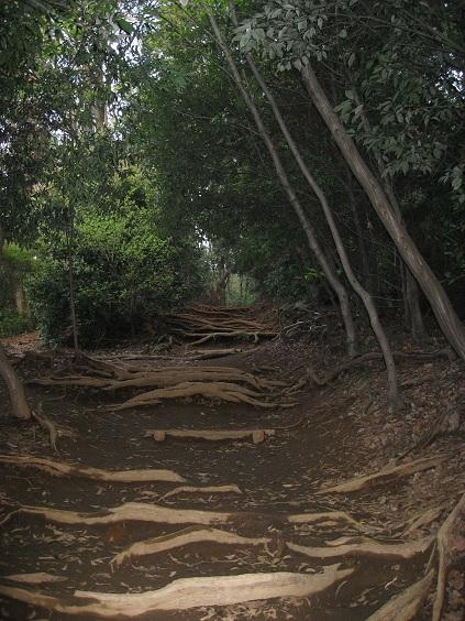 稲荷山コース木の根っこの階段