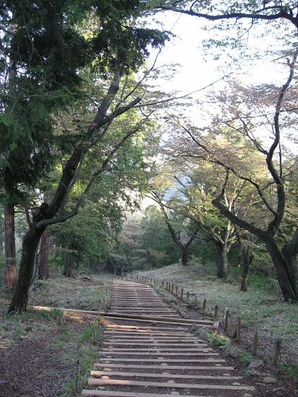 笹尾根縦走路の桜の木々