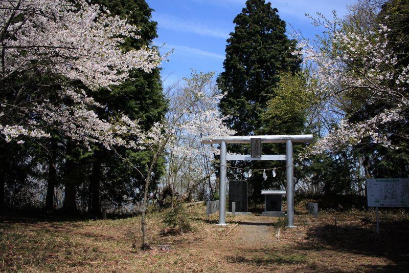 軍茶利山神社と桜