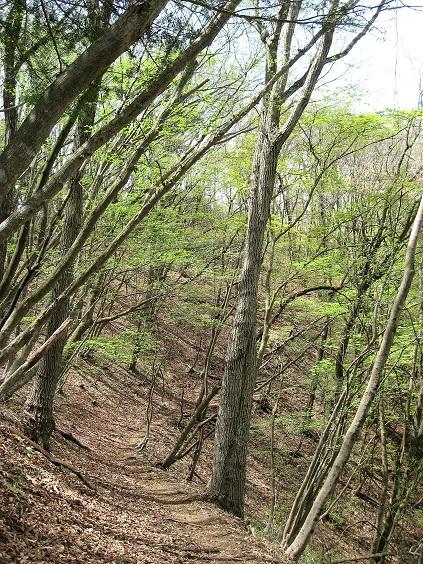 新緑の笹尾根