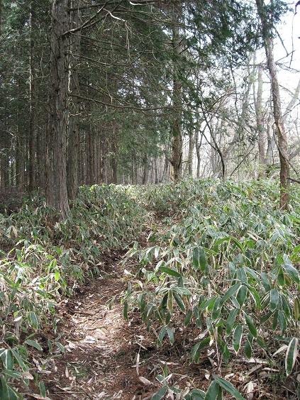 笹の尾根道
