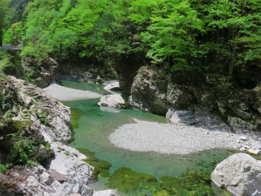 新緑と川の水