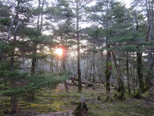 熊野の原生林からの日の出