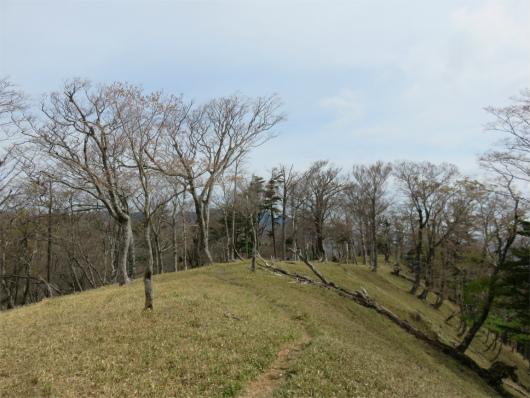 解放的な感じの登山道