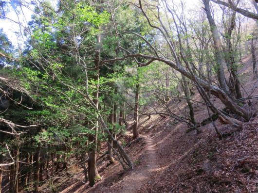 静かな樹林帯歩き