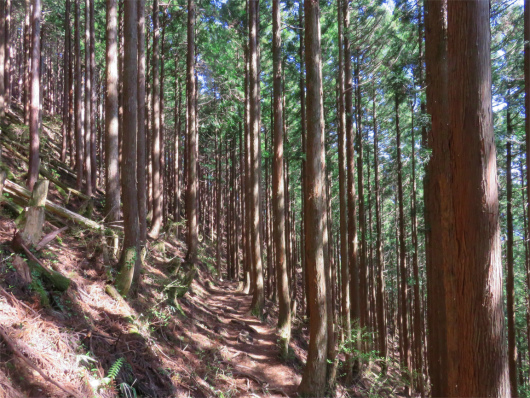 法力峠樹林